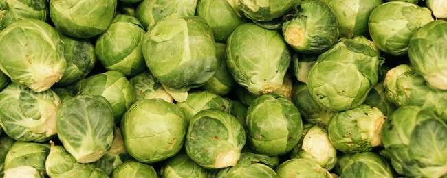 What Is The Intermittent Fasting Diet Plan With Brussel Sprouts